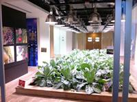 パソナキャリア東京本社 都心一等地のビルの中にはハイテク農場も